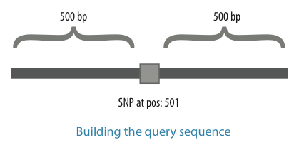 Building the query sequence